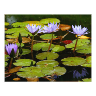 Water lilies personalized flyer