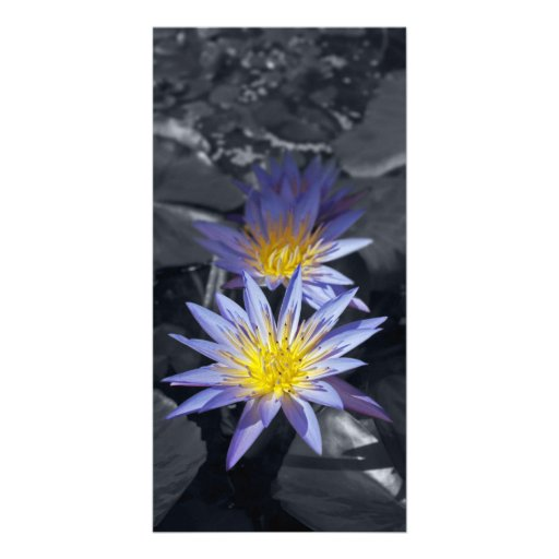 Water Lilies Photo Card