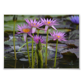 Water Lilies! Photo Print