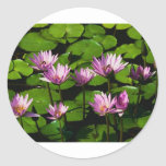 Water lilies round stickers