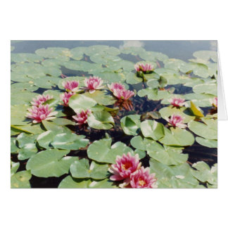 Water Lillies 01 Greeting Card