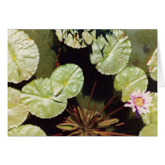 Water Lillies 02 Greeting Card