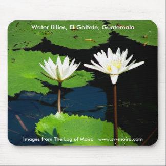 Water lillies, El Golfete, Guatemala Mouse Pad