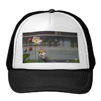 Water Lillies Lilly Mesh Hat