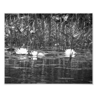 Water Lillies Photo Print BW