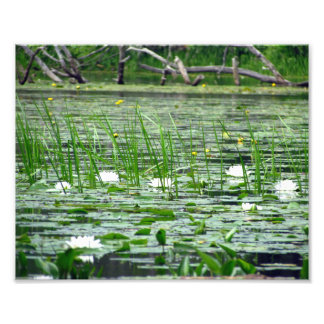 Water Lillies Photo Print