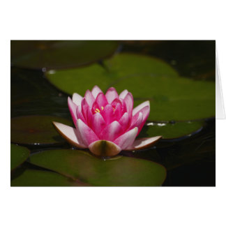 Water lilly and pads greeting card