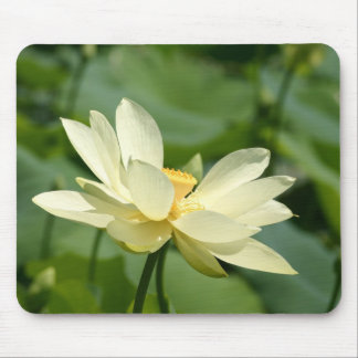 Water lilly flower mouse mat