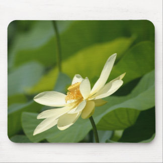 Water lilly flower mouse pad