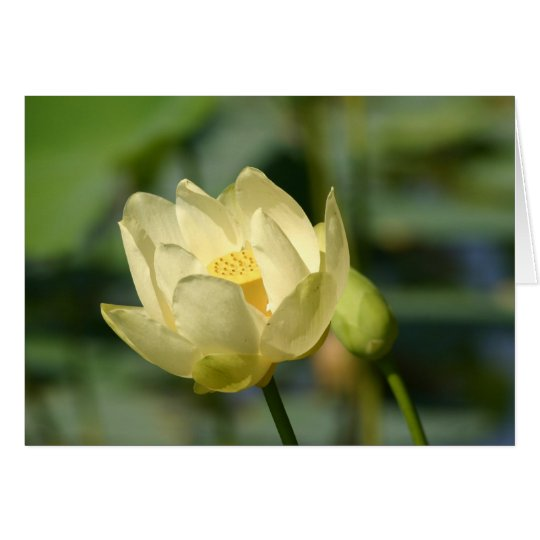 Water Lilly Lotus Card