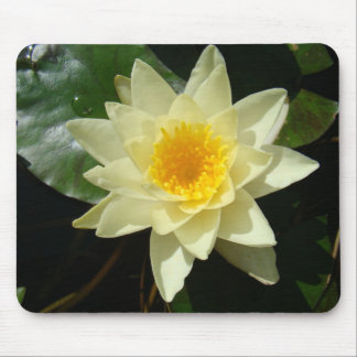 Water lilly mousepads