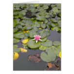 Water Lilly Note Card