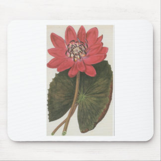 Water lilly Nymphaea Rubea Mouse Pad