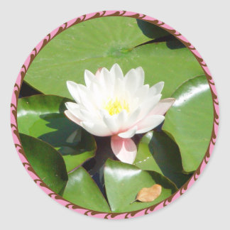 Water Lilly Pink sticker