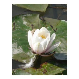 water lily 1 flyers