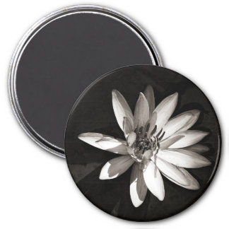 Water Lily 7.5 Cm Round Magnet