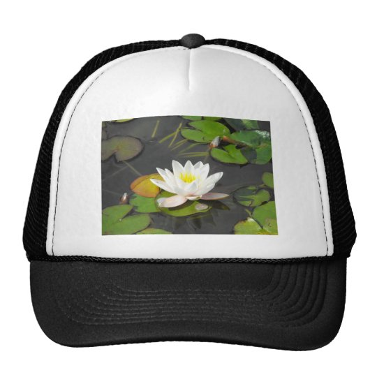 Water Lily and Leaves with coin Cap