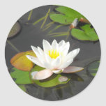 Water Lily and Leaves with coin Classic Round Sticker