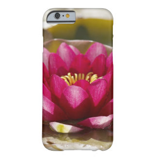 Water lily barely there iPhone 6 case