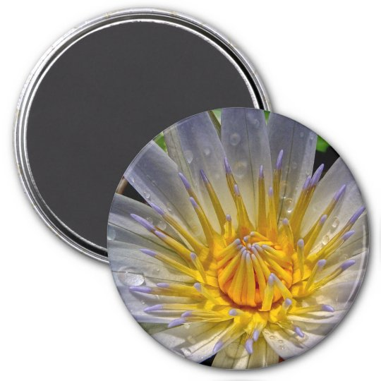 Water Lily Blue and Gold Magnet