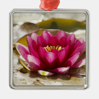 Water lily christmas ornament