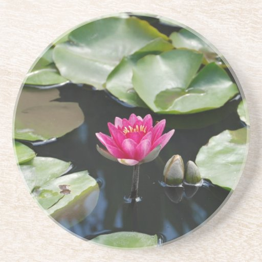 water lily drink coasters