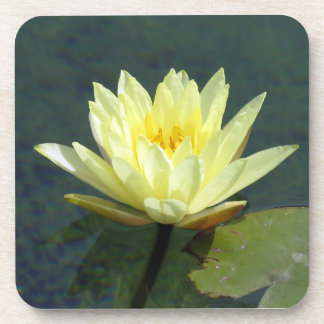 Water lily coaster