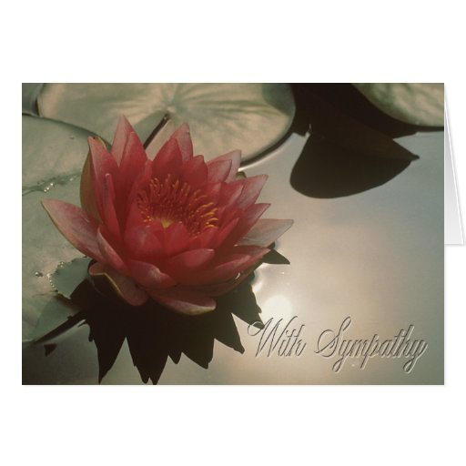 Water Lily Condolence Card Card