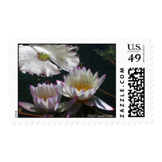 Water Lily Duet Stamps