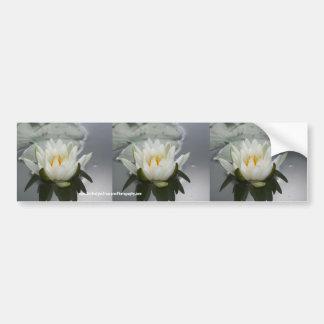 Water Lily Flower Bumper Sticker Car Art