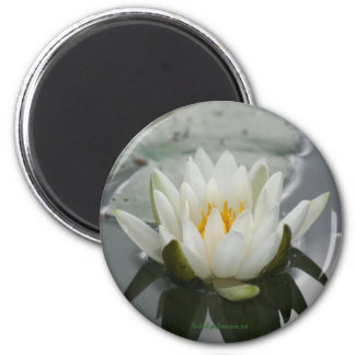 Water Lily Flower Photography Magnet