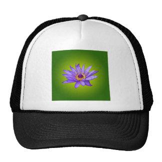 Water Lily Flower Pond Aquatic Purple Water Bloom Cap