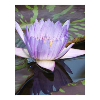 Water Lily Personalized Flyer