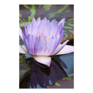 Water Lily Full Color Flyer