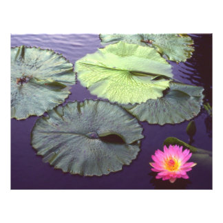 water lily flyers