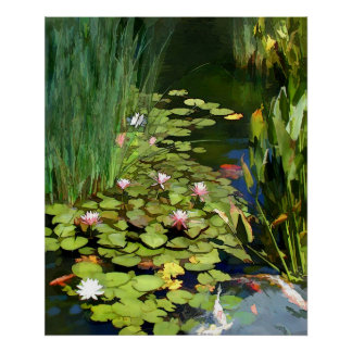 Water Lily Habitat Poster