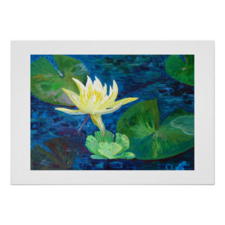 Water lily in flower poster