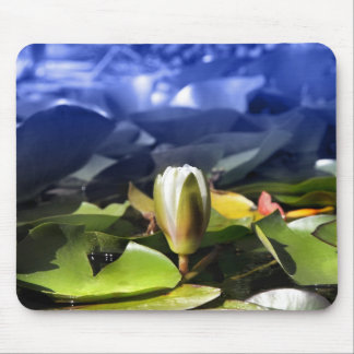 Water lily in pond mouse pad