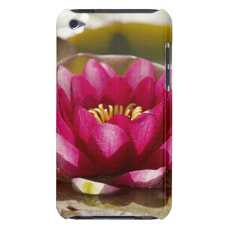 Water lily iPod touch cases