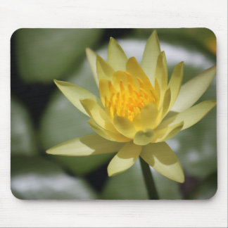 Water Lily Mouse Pads