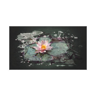 Water Lily - of Lotus flower, sea-rose in the pond Canvas Print