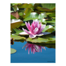 Water Lily Perfection - Reflection #1 Photo Art