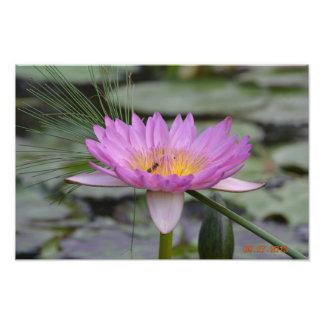 Water Lily Art Photo