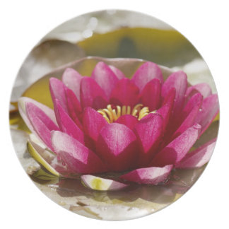 Water lily plate