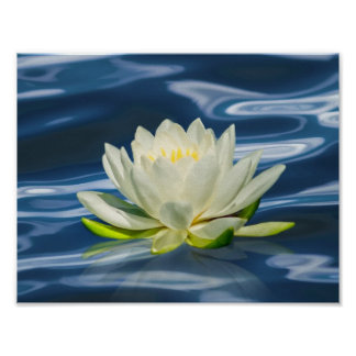 Water Lily Reflected on Blue Water Print