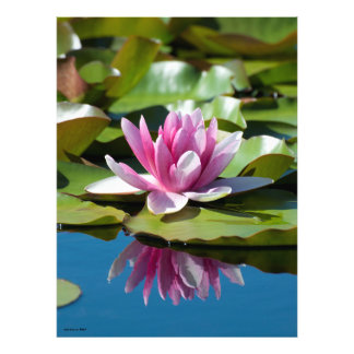 Water Lily Reflection 2 Photograph