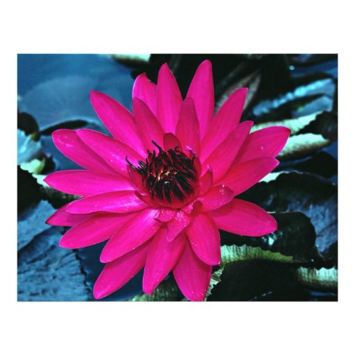 Water lily, tropical night flyer design