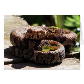 Water Moccasin Greeting Card