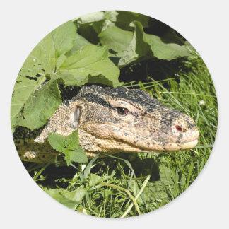 Water monitor lizard classic round sticker