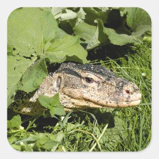 Water monitor lizard square sticker